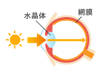 光が網膜にあたるイメージ