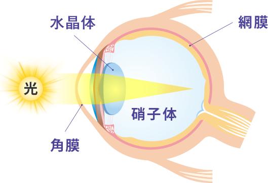 目の構造図
