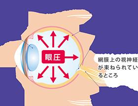 眼球構造図