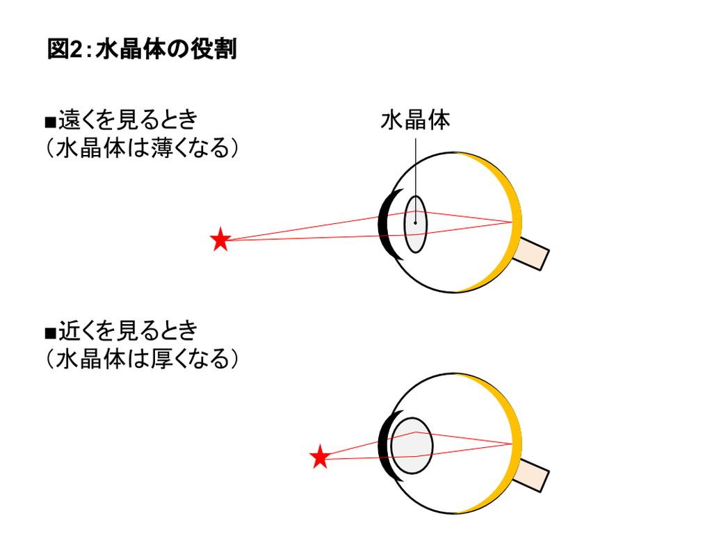 水晶体の役割を表す図