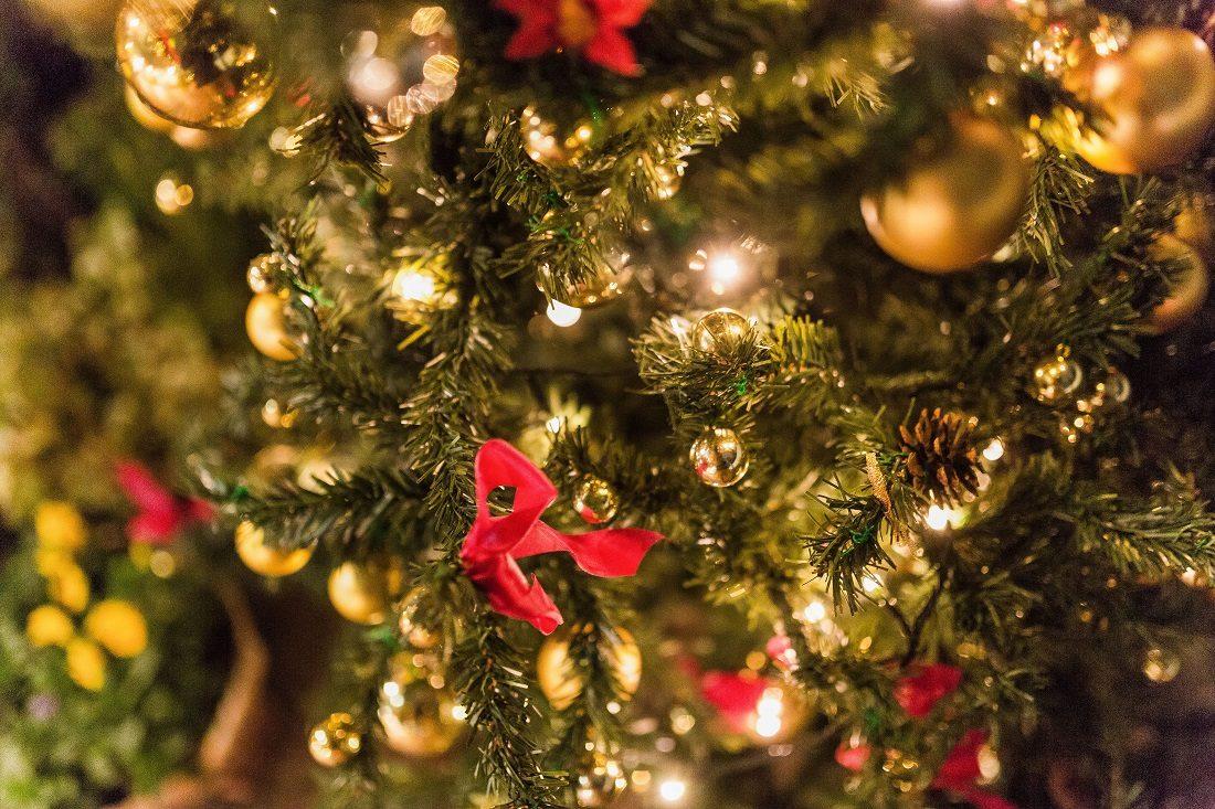 クリスマスもみの木の写真