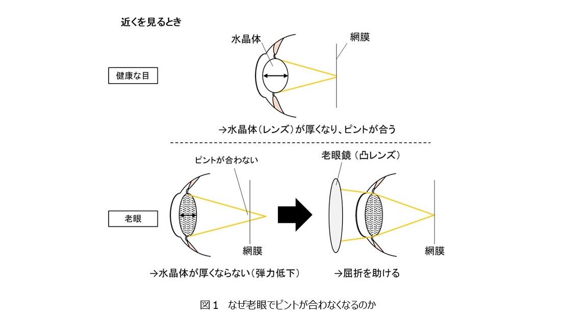 老眼の説明図