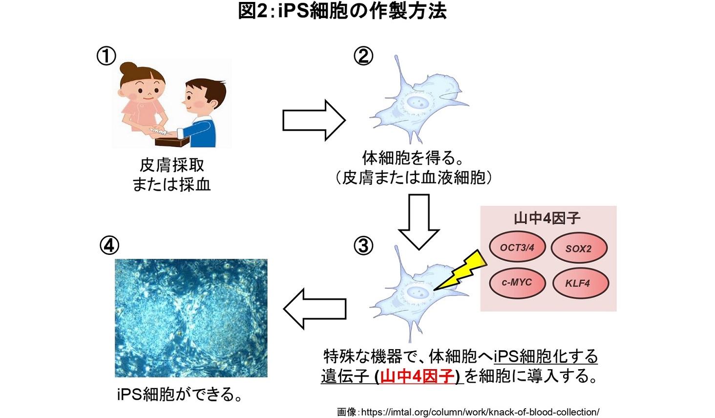 iPS細胞の作製方法の図