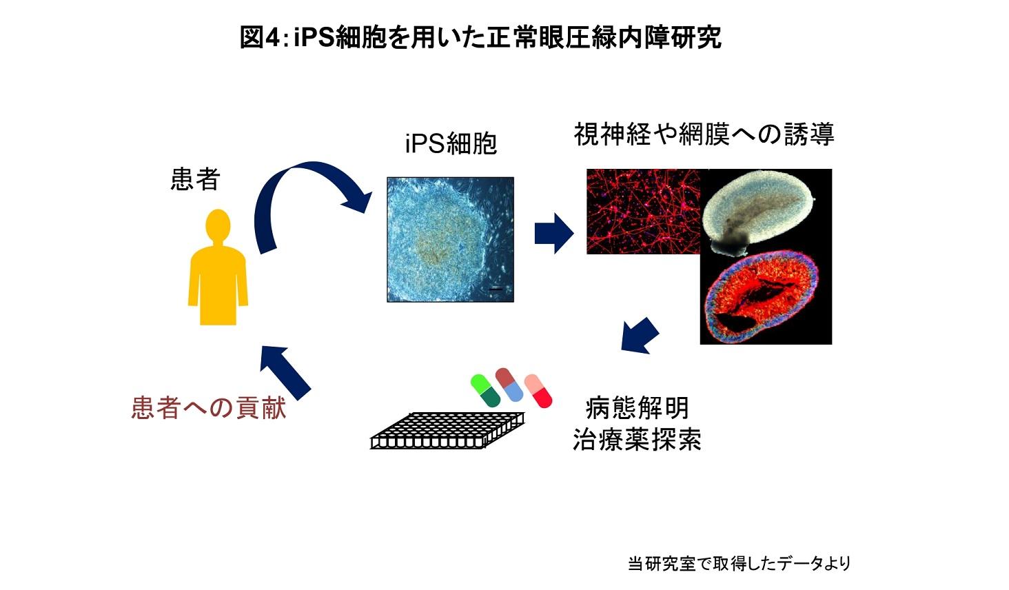 iPS細胞を用いた研究の図