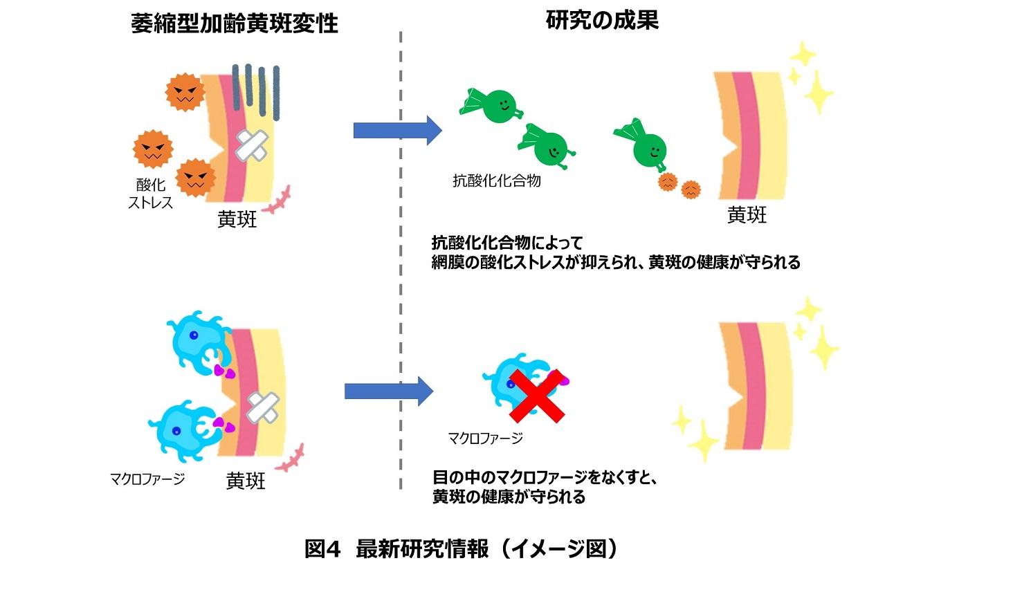 最新研究情報のイメージ図