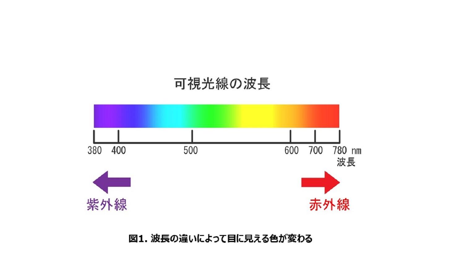 波長の違いによって目に見える色がかわる