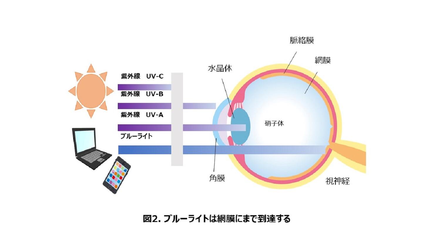 ブルーライトが目の網膜まで届くことを示した図