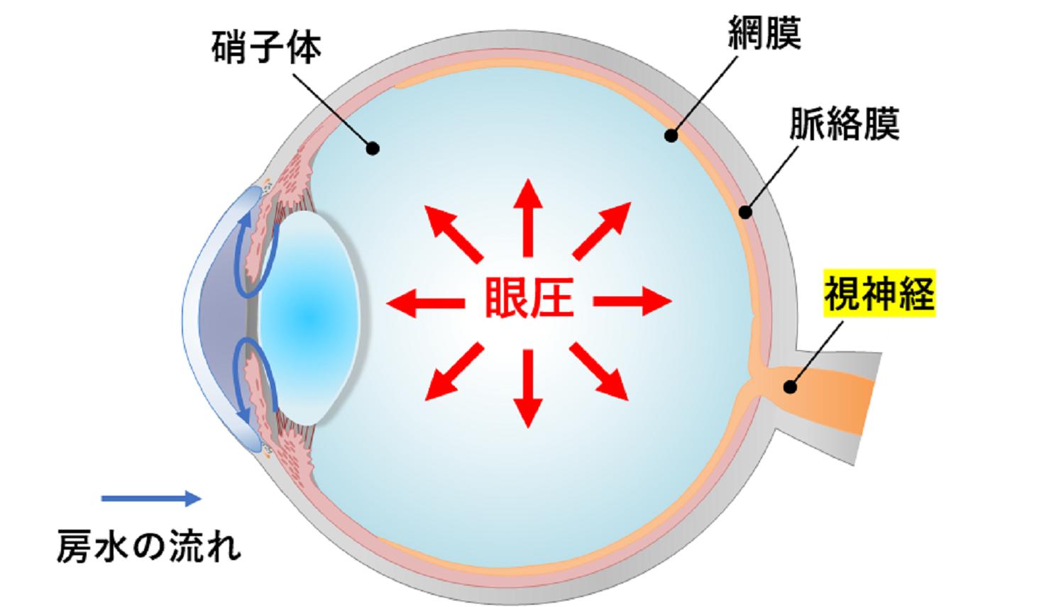 眼圧をイメージする眼球の断面図